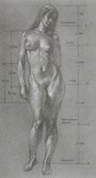 Пропорции женского тела
